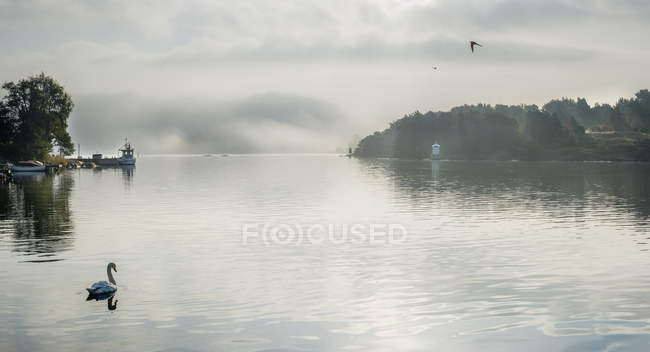 Swan on lake water with cloudy sky reflection — Stock Photo