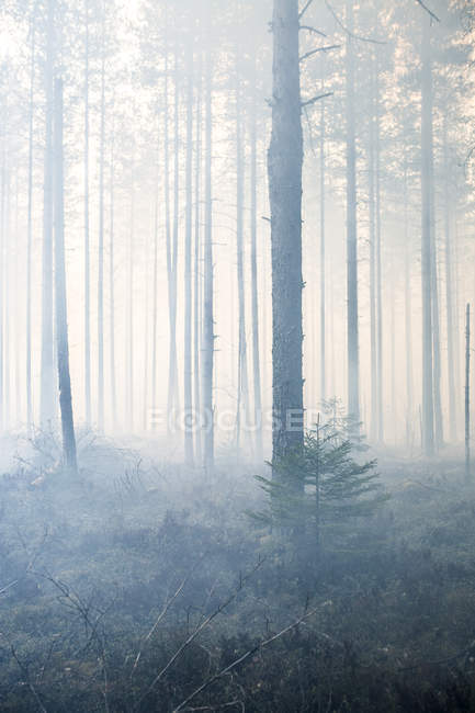 Scenic view of forest in foggy day — Stock Photo