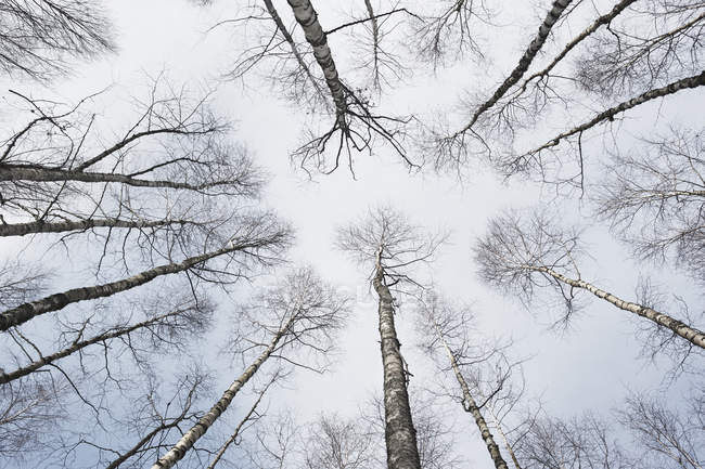 Vue à angle bas des cimes des arbres contre le ciel — Photo de stock
