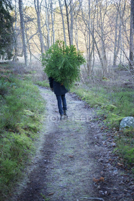 Teenage boy walking and carrying tree — Stock Photo
