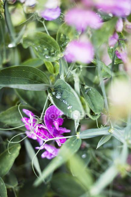 Close up shot of purple wildflowers — Stock Photo