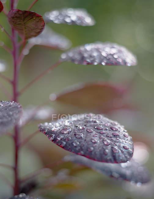 Gros coup de feuilles de la plante avec des gouttes d'eau — Photo de stock