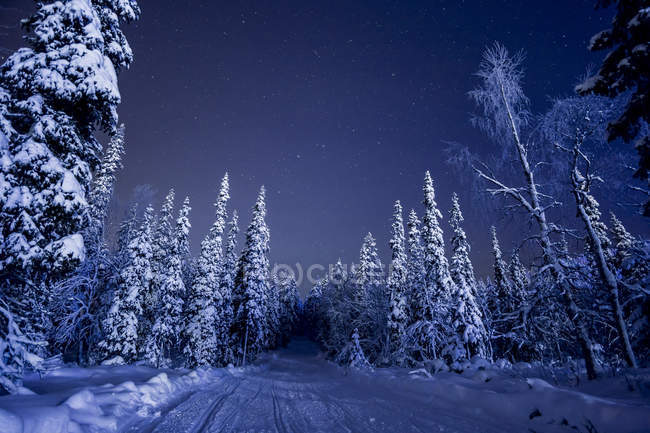Snowcapped country road surrounded by pine trees at night — Stock Photo