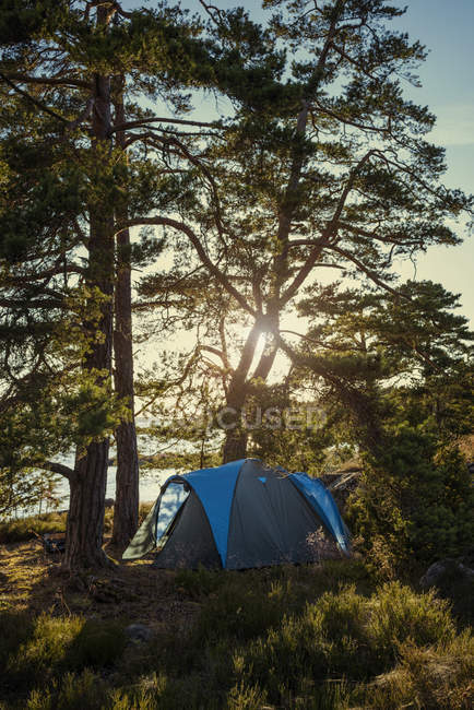 Tent in forest in sunny day, northern europe — Stock Photo
