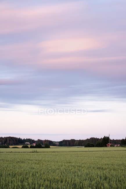 Vista panoramica del cielo con le nubi sopra il campo — Foto stock