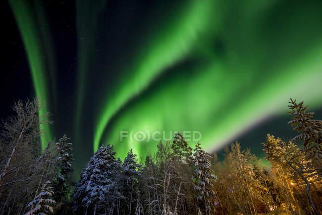 Vista de árboles y aurora boreal cielo iluminado - foto de stock