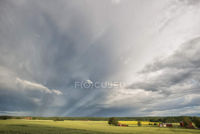 Landscape view of green field, woods and cloudy sky — Stock Photo