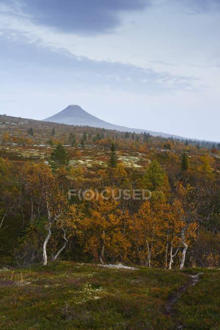 Árvores de outono floresta e hill sob céu nublado — Fotografia de Stock