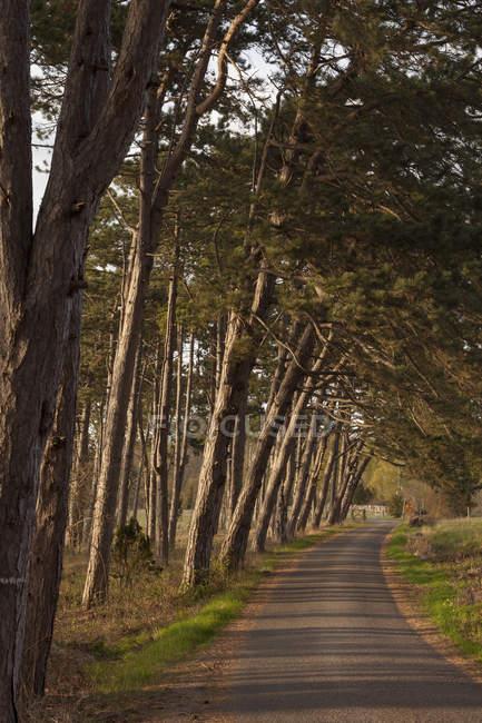 Vue sur route rurale bordée d'arbres — Photo de stock