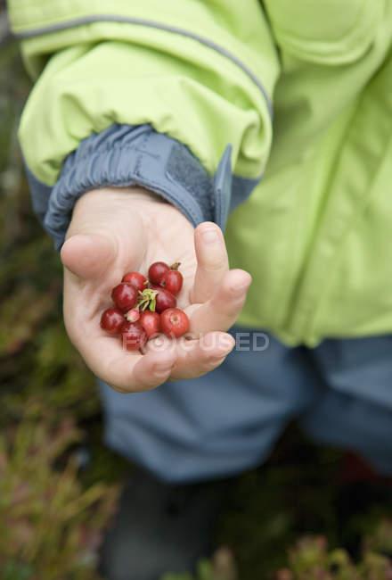 Garçon tenant dans la main, les canneberges recadrée tir — Photo de stock