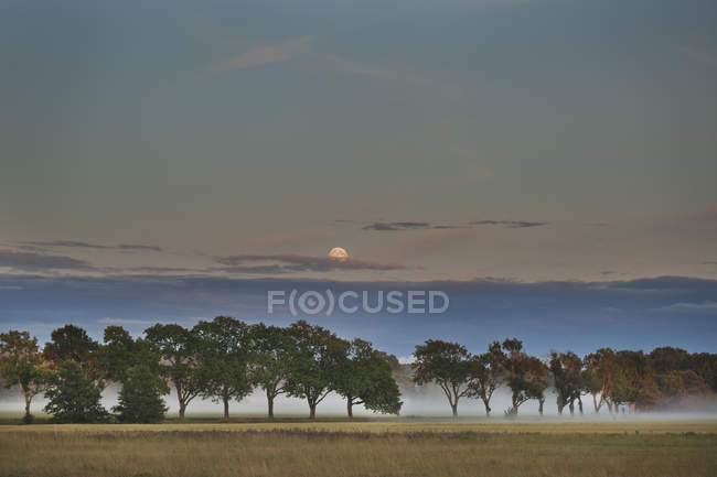 Plain with trees covered in fog at dusk — Stock Photo