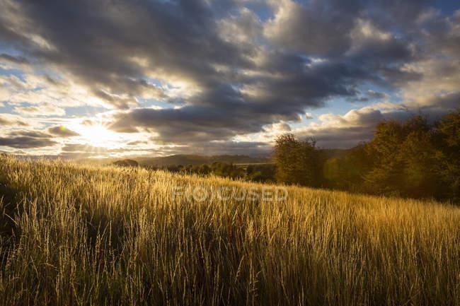 Champ de céréales agricoles sous un ciel nuageux — Photo de stock