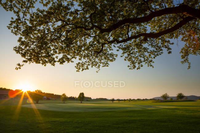 Vue sur Ombergs Golf Resort avec branches d'arbres au coucher du soleil — Photo de stock