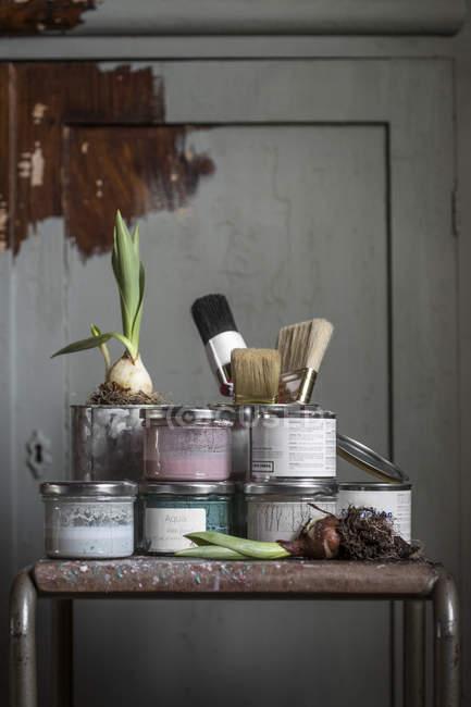Barattoli di vernice e bulbi di cipolla sulla tabella — Foto stock