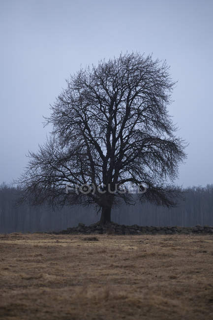 Bare tree on field beside forest at dusk — Stock Photo