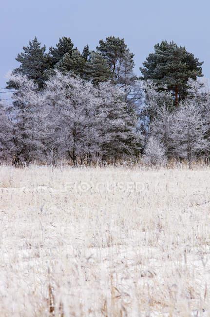 Vista de congelados de grama e as árvores sob o céu azul — Fotografia de Stock