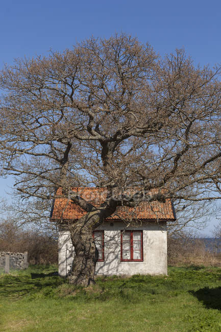 Cottage and bare tree in bright sunlight — Stock Photo