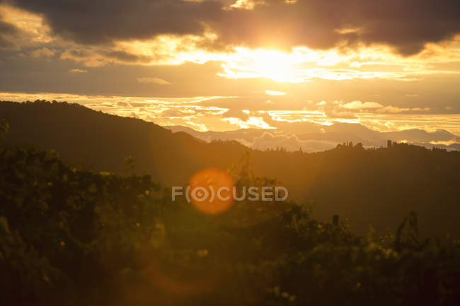 Scenic view of vineyard at sunset, lens flare — Stock Photo