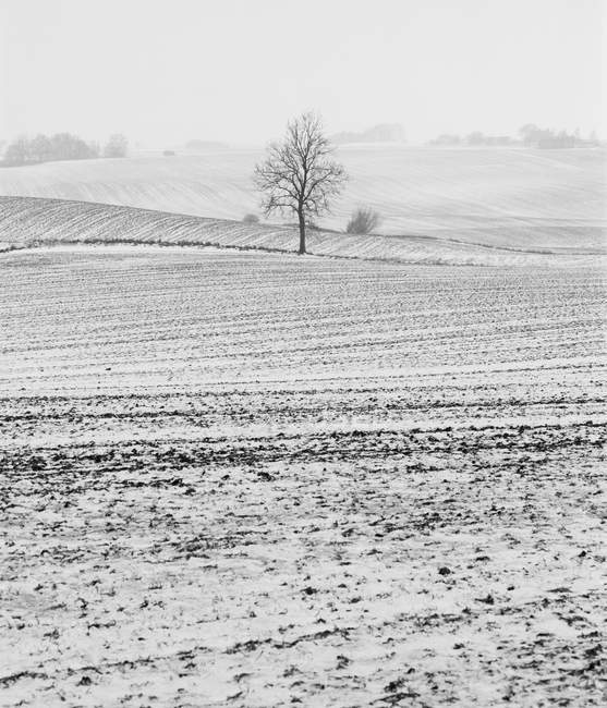 Bare tree at snowcapped field, black and white — Stock Photo