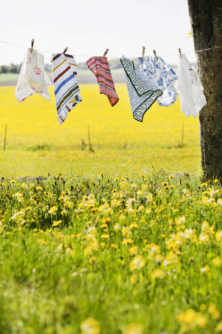 Napkins on drying line in field of dandelions — Stock Photo