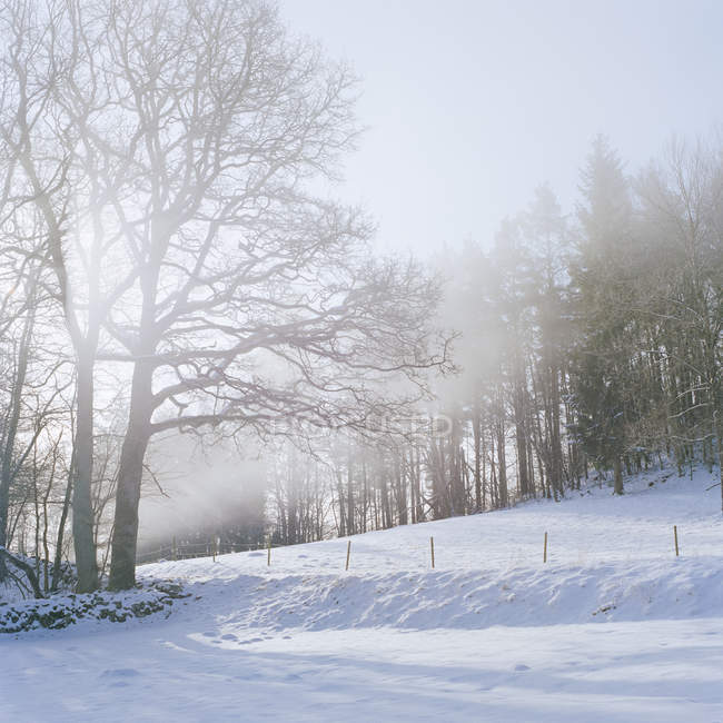 Bare trees on snow covered land — Stock Photo