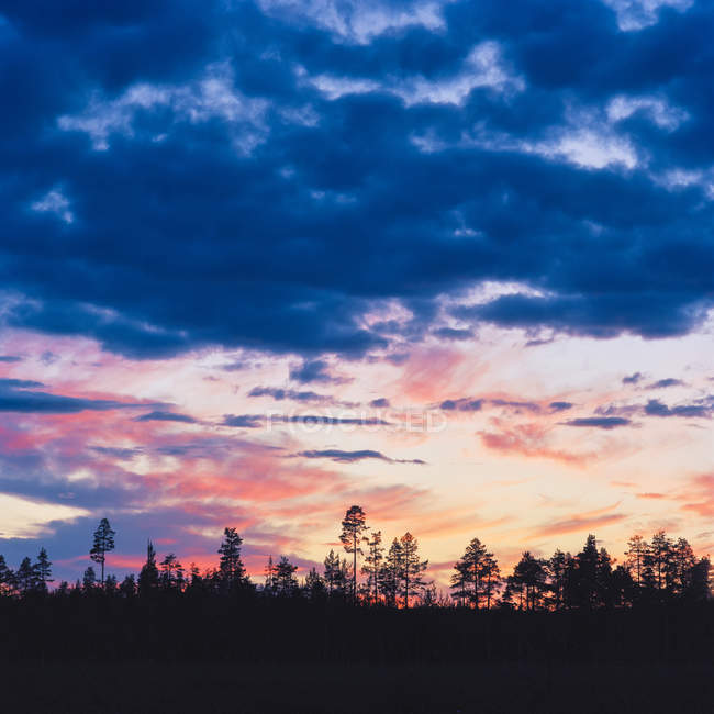 Pine trees silhouettes in cloudy evening sky - foto de stock