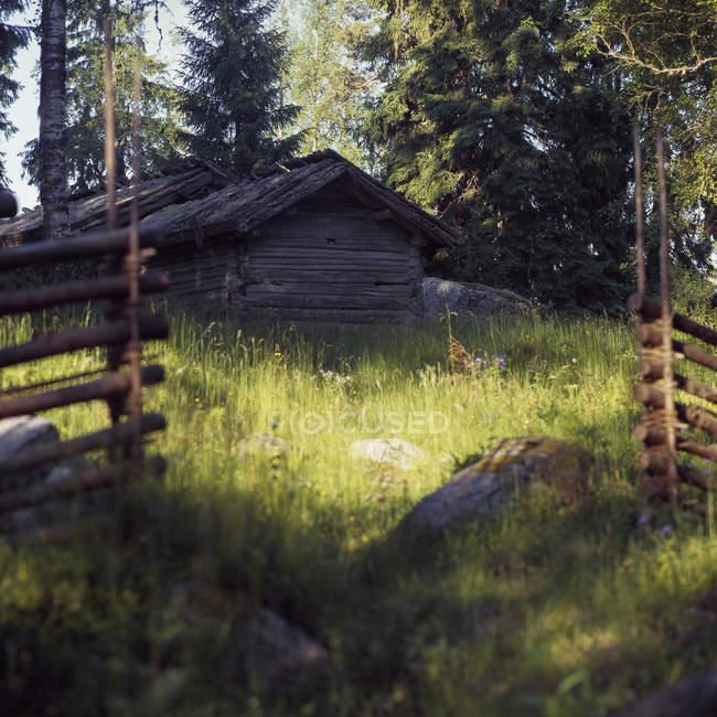 Вид спереди деревянный коттедж в лесу — стоковое фото