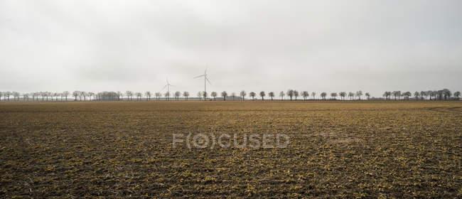 Вид на отдаленные ветряные турбины и деревья на горизонте — стоковое фото