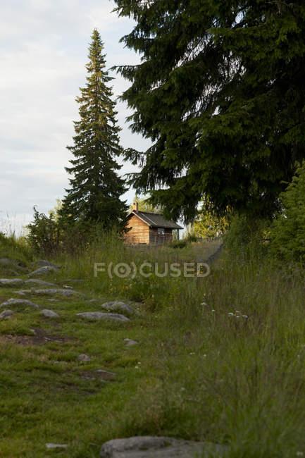 Pequeña cabaña de madera en bosque de pinos - foto de stock