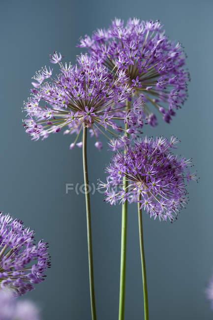 Close-up vista de flores frescas de primavera — Fotografia de Stock