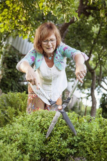 Arbusto de caixa comum mulher sênior poda — Fotografia de Stock