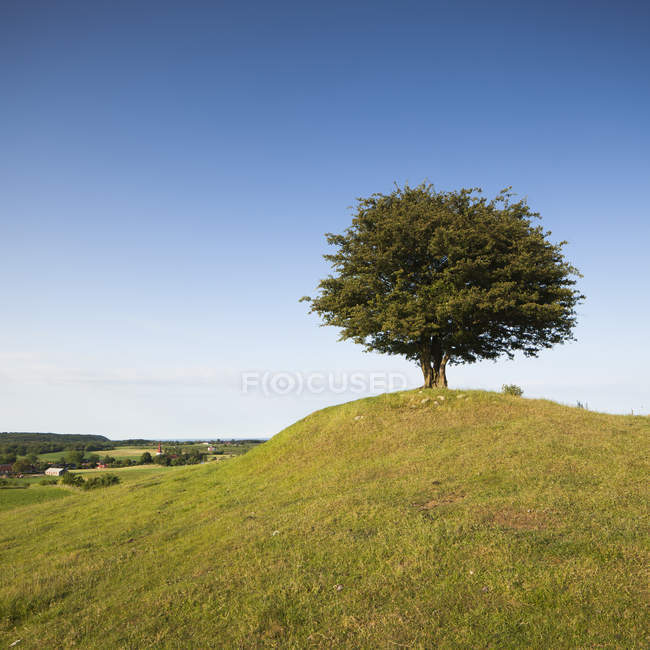 Rural landscape with tree on green hill — Stock Photo