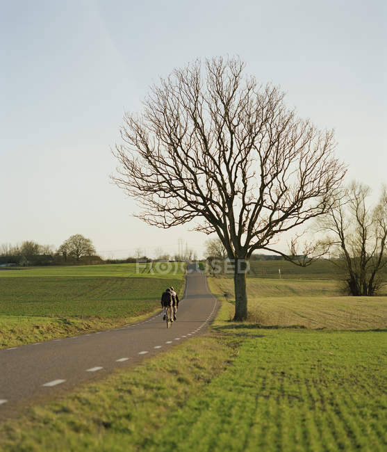 Cyclists on rural road, rear view — Stock Photo