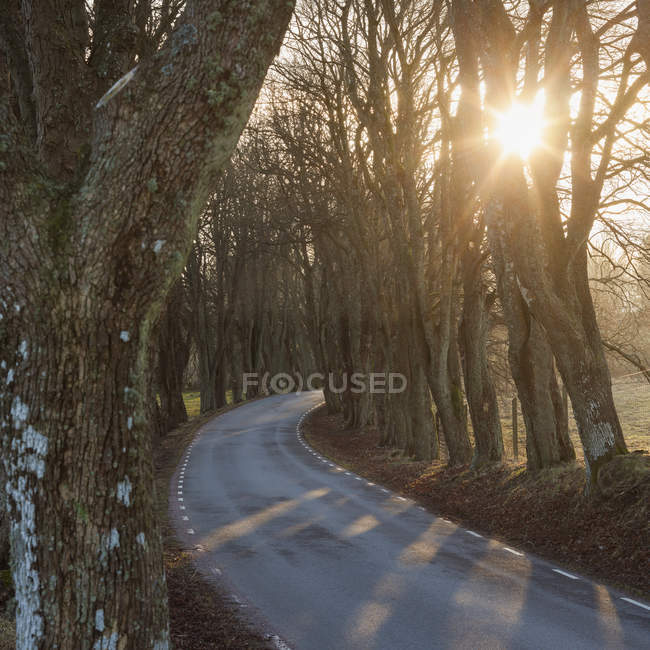 Empty road and bare trees at sunrise — Stock Photo
