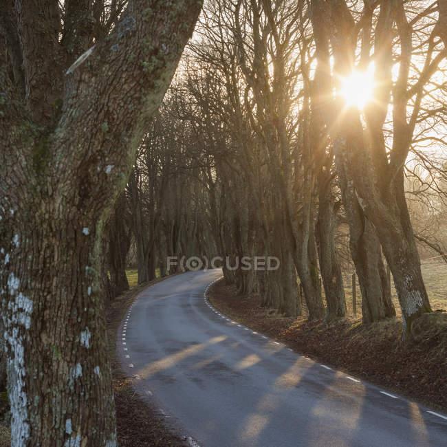 Пустые дороги и голые деревья на рассвете — стоковое фото