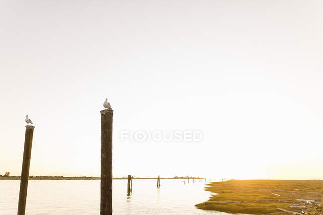 Seagulls perching on wooden posts at seashore during sunset — Stock Photo