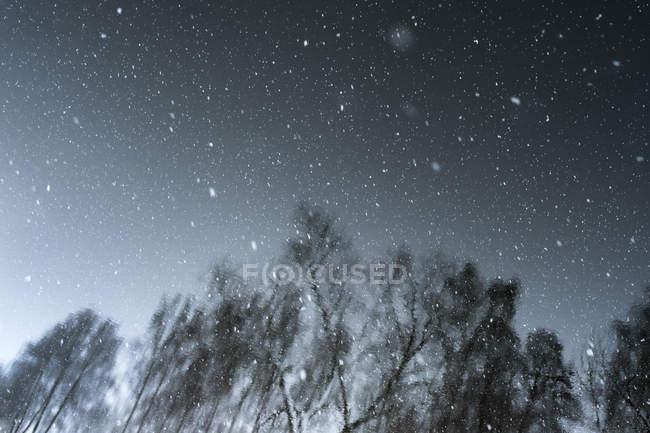 Reflexion der Bäume im Wasser mit fallendem Schnee — Stockfoto