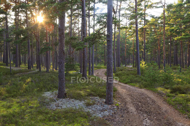 Dirt track passing through forest trees with shining sunlight — Stock Photo
