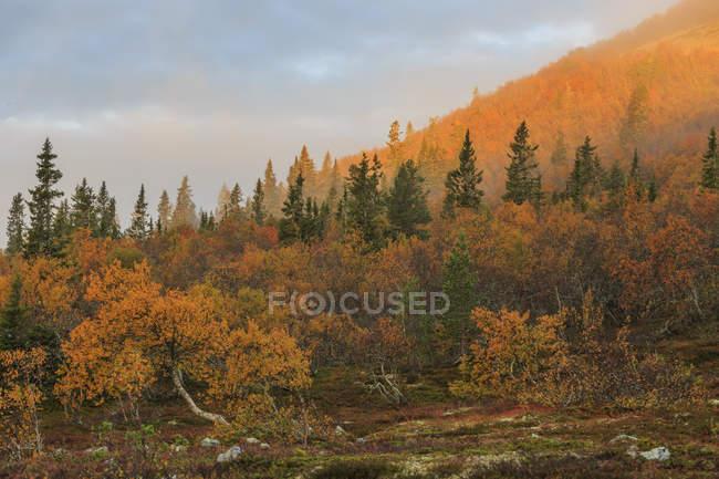 Осенние деревья леса под пасмурным небом — стоковое фото