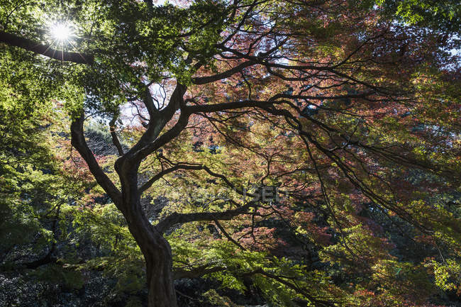 Arbre avec branches incurvées dans la lumière du soleil rétro-éclairé — Photo de stock