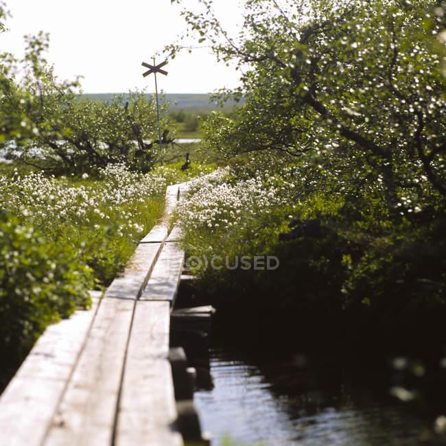 Vue panoramique du chemin de planche en bois dans le parc national Fulufjallet — Photo de stock