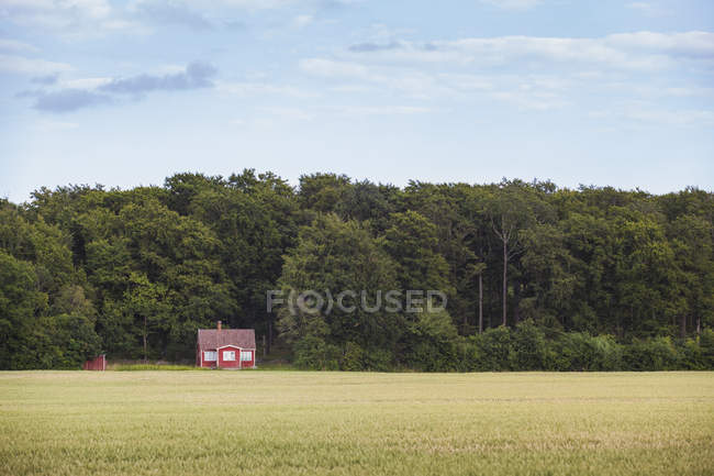 Red Farmhouse against forest under blue sky — Stock Photo