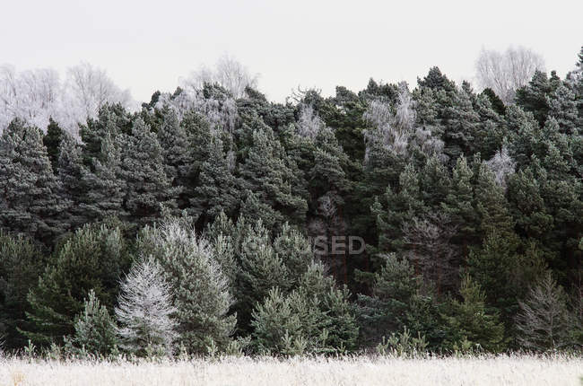 Frozen grass and trees under overcast sky — Stock Photo