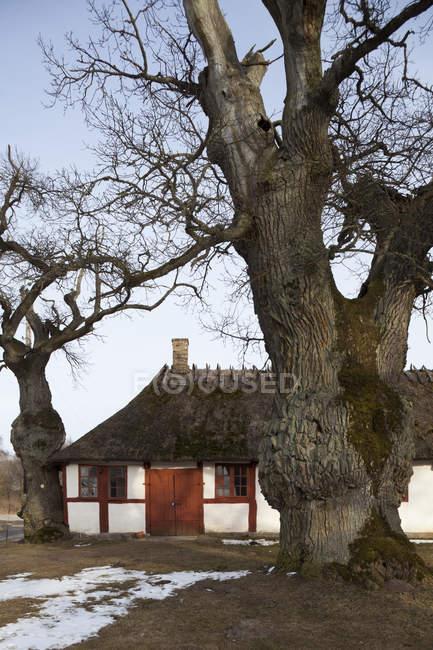 Vecchia casa di campagna e grandi alberi nudi — Foto stock
