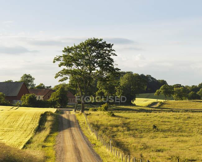 Сельская дорога в зеленый ландшафт с деревьями — стоковое фото