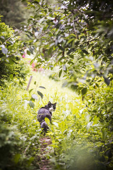 Cat in lush greenery looking back at camera — Stock Photo