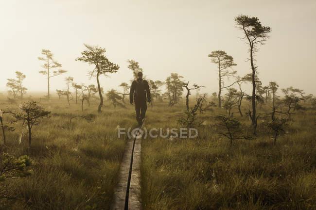 Людина прогулянки через магазин словами Мосса Національний парк — стокове фото