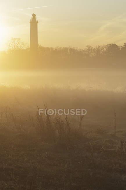 Silhueta de árvores e farol de neblina do amanhecer — Fotografia de Stock
