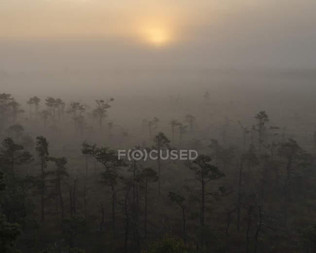 Tienda Mosse Parque Nacional árboles en la niebla - foto de stock
