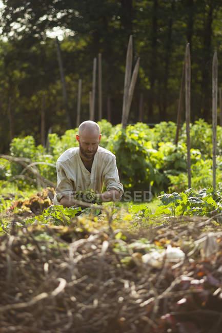 Man working in garden, differential focus — Stock Photo